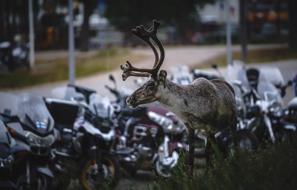 Hotel Tunturi Saariselkä Jänkhällä Jytisee